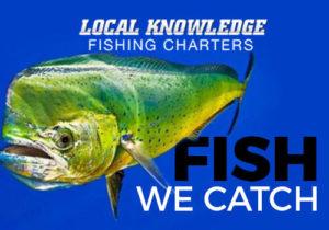 Mahi Fishing Ft Lauderdale
