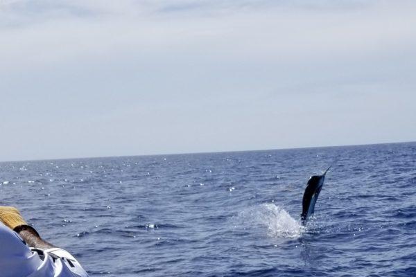 Sailfish Ft Lauderdale