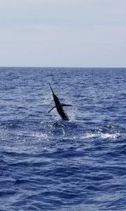Fishing Ft Lauderdale